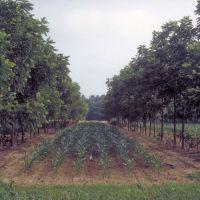 Corn and walnuts (26245603811)