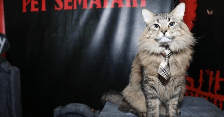 Cats in Ties at Press Junkets