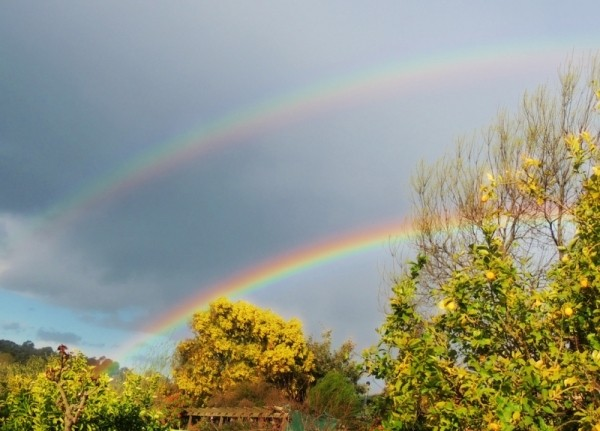 double rainbows at my backyard