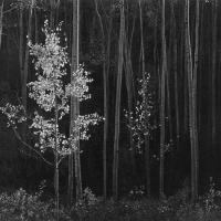 Fotografía: El sistema de escala zonal de grises de Ansel Adams y su nueva forma de controlar la exposición