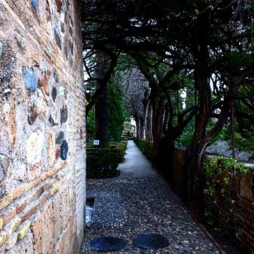 Nazrid 17 Alhambra Granada