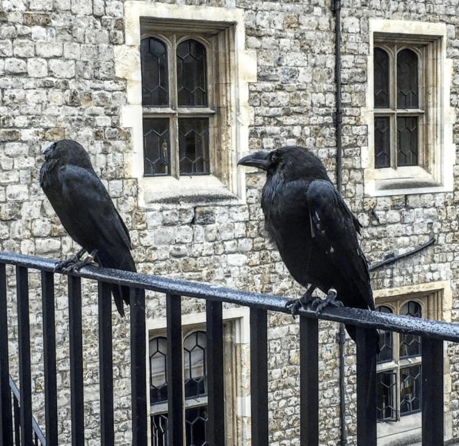 Torre de Londres corvos