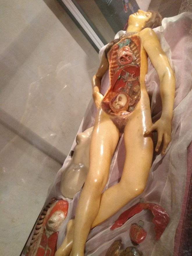 Bologna universidade Museu palazzo poggi venerina modelo anatomico