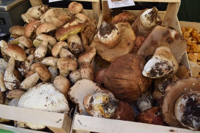 Sasso Marconi apenino Bologna sagra festa trufas tartuffo cogumelos porcini