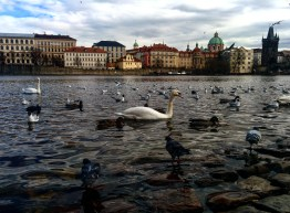 Praia do Vltava Praga 3