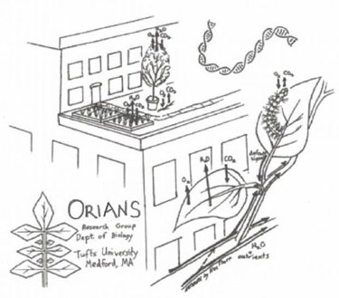 Tufts University: The Orians Lab, Department of Biology