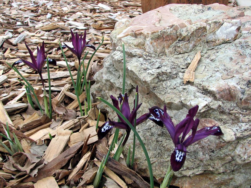 purple-fowers-001web