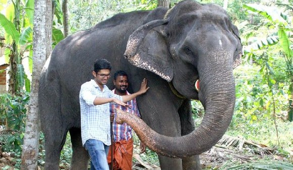 Dakshayani, pictured here in 2016, lived at the Chengalloor Mahadeva Temple in southern Kerala state