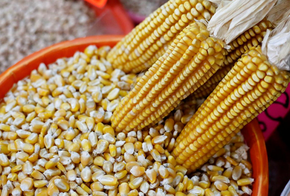 Corn cobs and yellow corn are on display at a market in Mexico City, Mexico May 19, 2017
