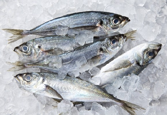 Fishes in cold store