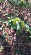 Chestnuts&blackberries