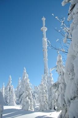winter423