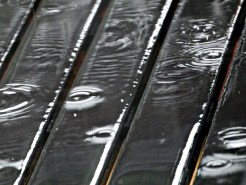 Raindrop Ripples