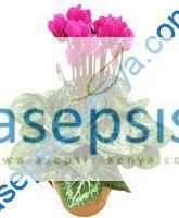 Garden & Landscape plants & flowers