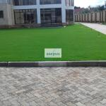 Well mowed Arabic grass lawn