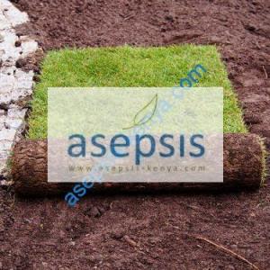 Zimbabwe Grass sods