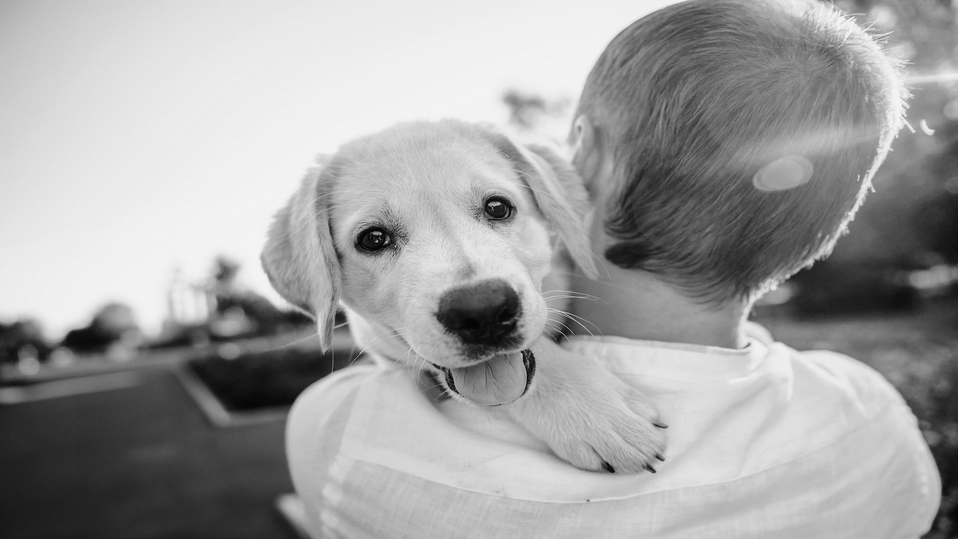 El perro es el mejor amigo del hombre y su muerte puede ser mas dolorosa que la de una persona1920