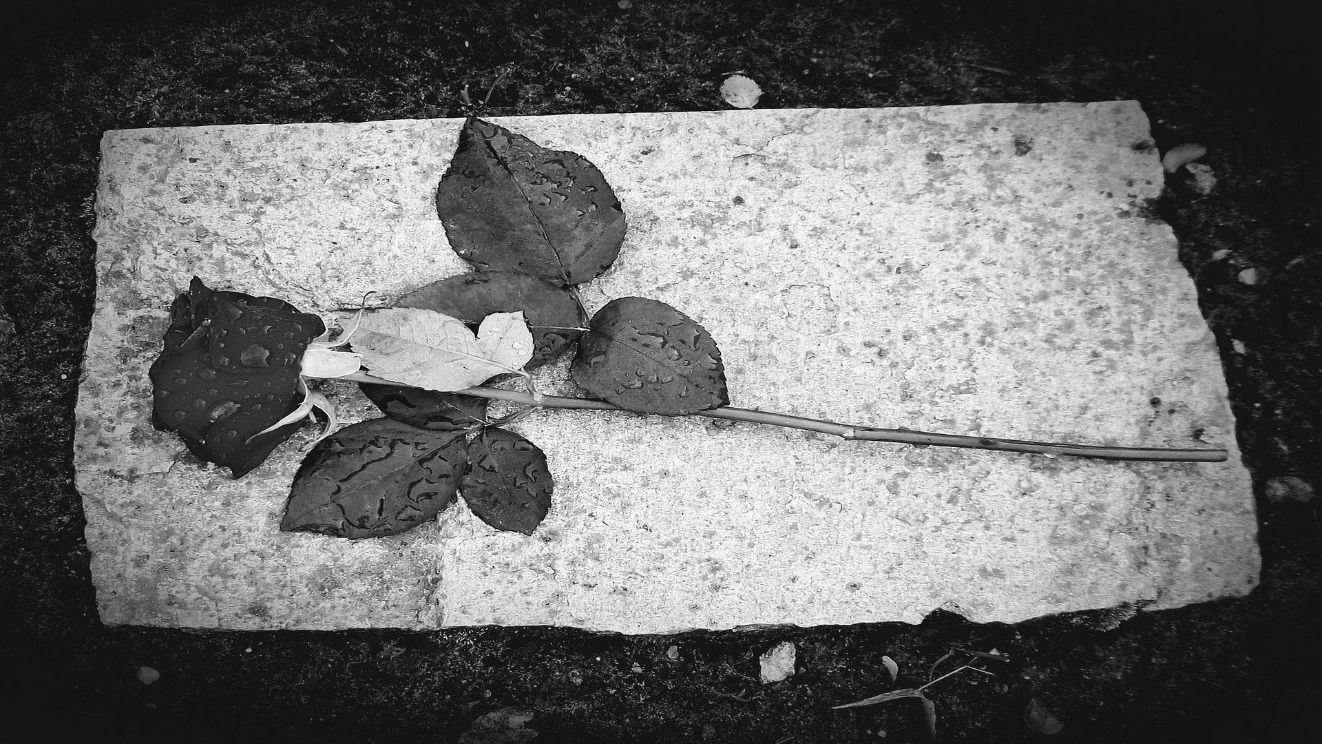 No vimos bastantes muertos (Arturo Perez-Reverte).1920