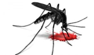 Hati-hati, Ada 2 Jenis Demam yang Diakibatkan Oleh Gigitan Nyamuk