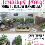 Terrarium Party Plus How To Make A Terrarium