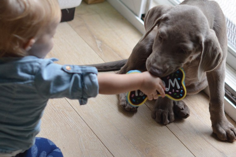 Giggles and Wiggles! How to Introduce your Baby & Puppy