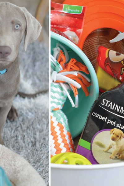 How to Create the Perfect Puppy Kit!