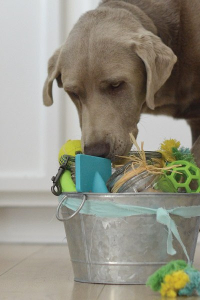 Celebrate your Dog with a Birthday Gift Basket!