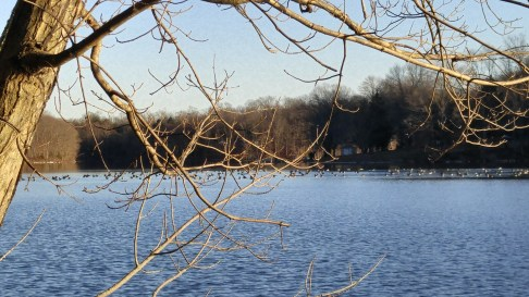 There were many hundreds of geese appearing to have congregated to remember him