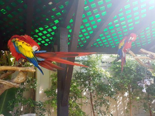 San Diego Zoo USA 11 500x375 - San Diego Zoo in 360º