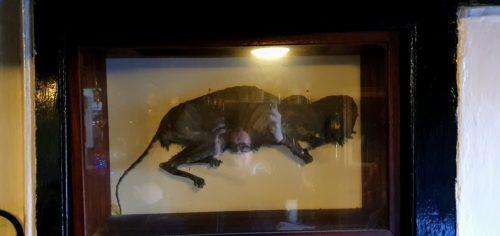 Mummified Cat Stoke Gabriel Paignton
