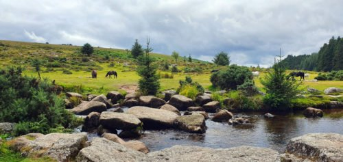 Ponies next to a river and trees on Dartmoor