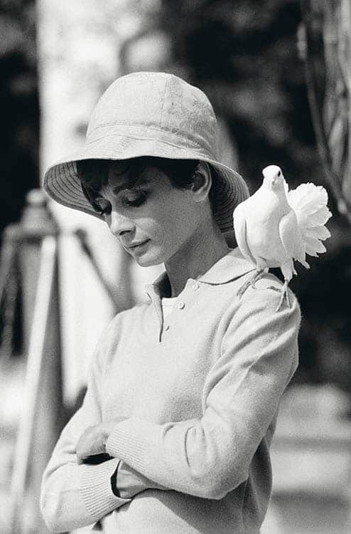 Terry O'Neill Hepburn With Dove - Ashcroft Art