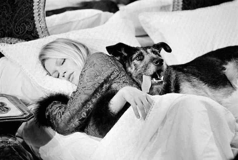 Terry O'Neill Brigitte Bardot - Ashcroft Art