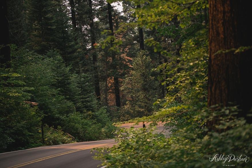 sequoia rv trip summer 2015_0031