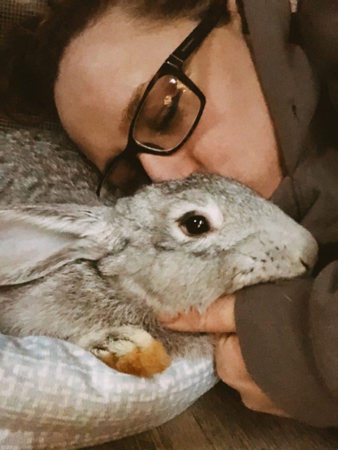rabbit pneumonia and the dangers of cedar bedding