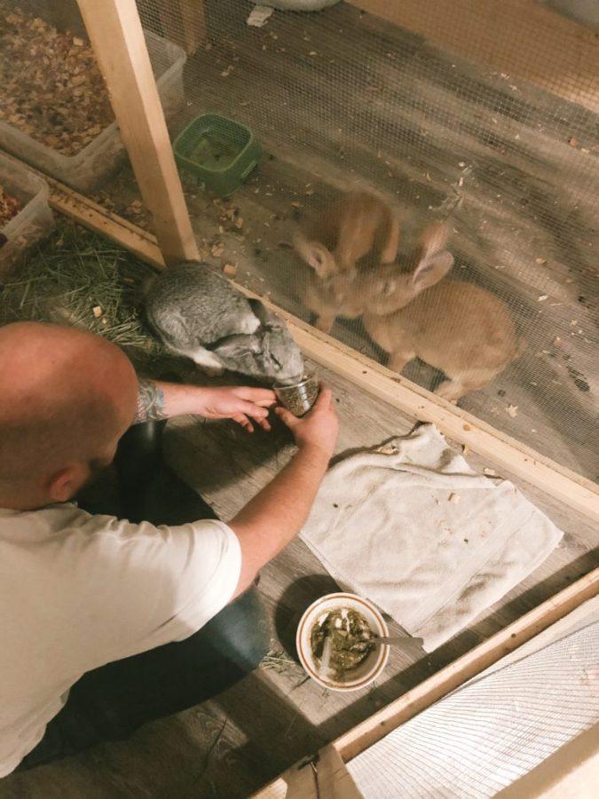 spoon feeding sick rabbit
