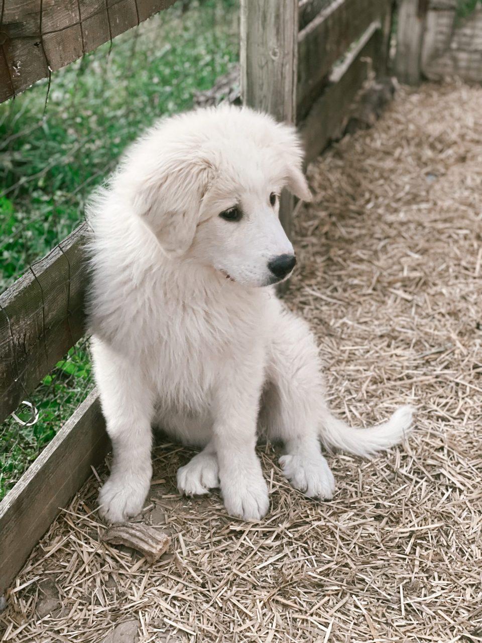mazikeen the farm dog