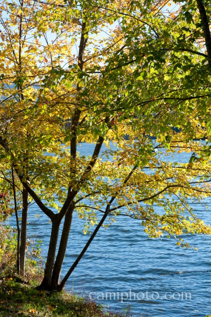 Biltmore Lake Tree in Fall