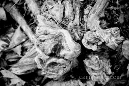 BW root abstraction