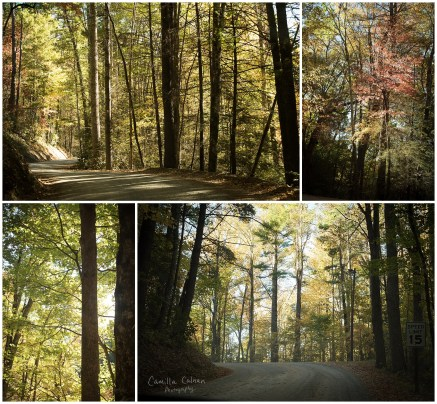 The skinny dirt road leading to Cataloochee Valley