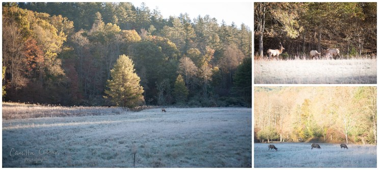 Elk enjoying the cold weather.