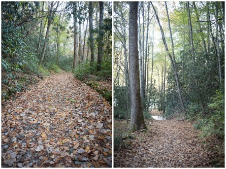 A Blanket of fallen leaves cover the trails.