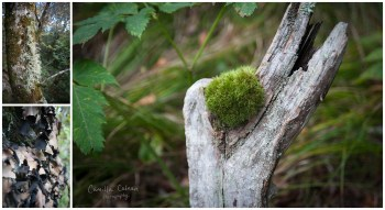 A wide variety of mosses, lichen and other types of fungi near the trail.