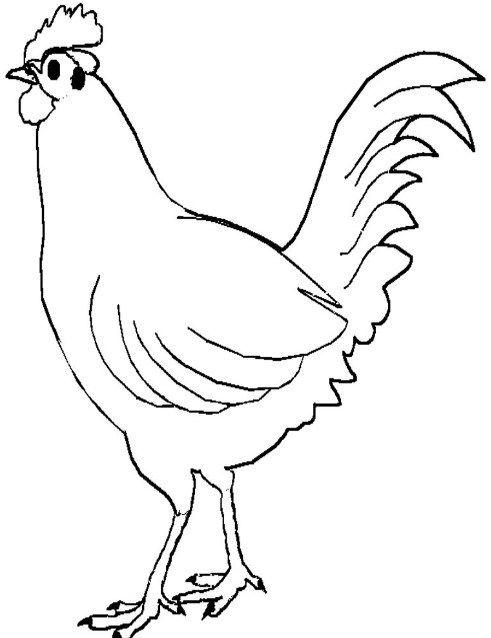 Gambar Sketsa Ayam : gambar, sketsa, Lukisan, Mudah, Cikimm.com