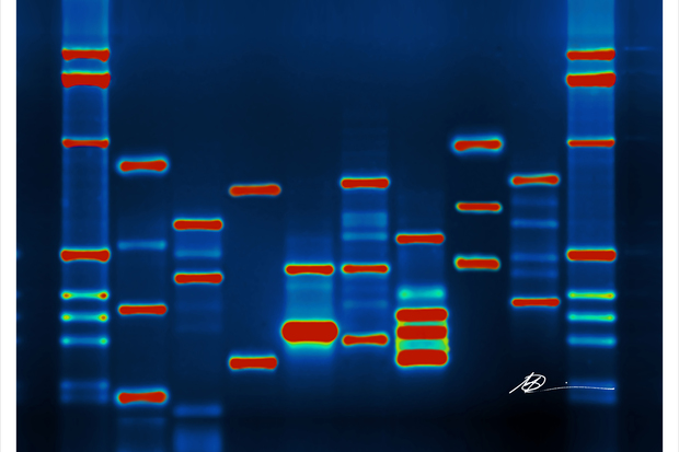 Dad's DNA: The Mother Lode