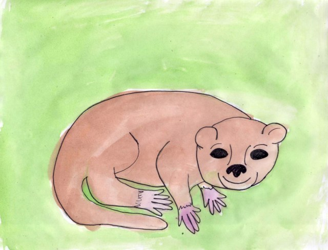 Olinguitos (Wonderful Wildlife, Book 5) by Ashlee Craft - Olinguito