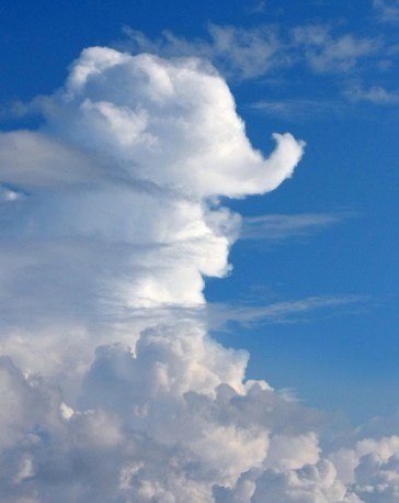 elephantcloud