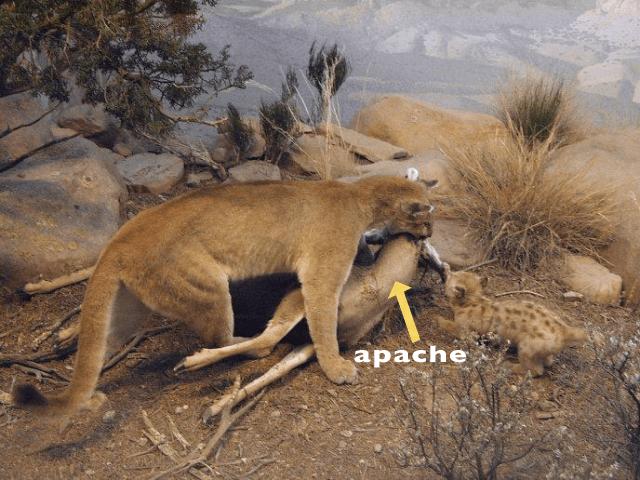 Mountain Lion killed my apache, fixed