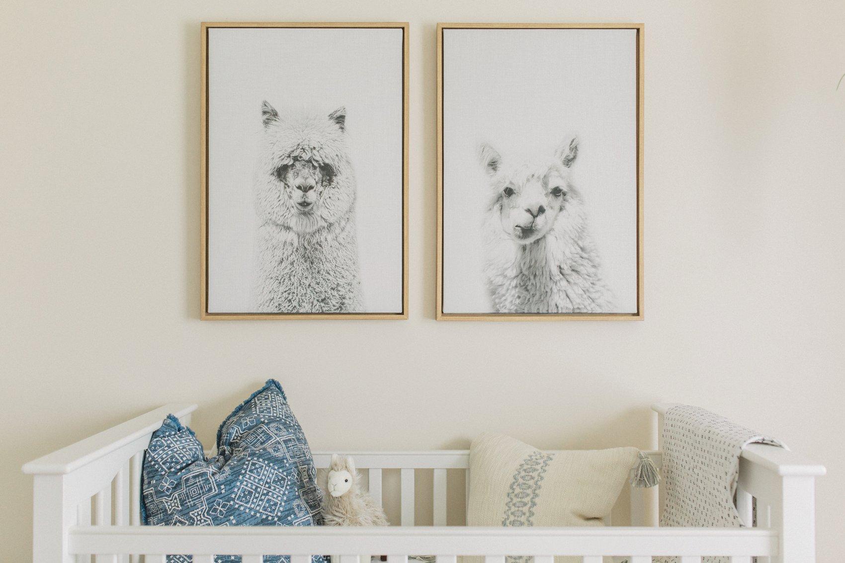 Baby Boy Llama  Cactus Nursery  Baby Errington