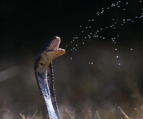 snake_3n